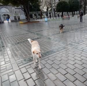 Street dogs-T